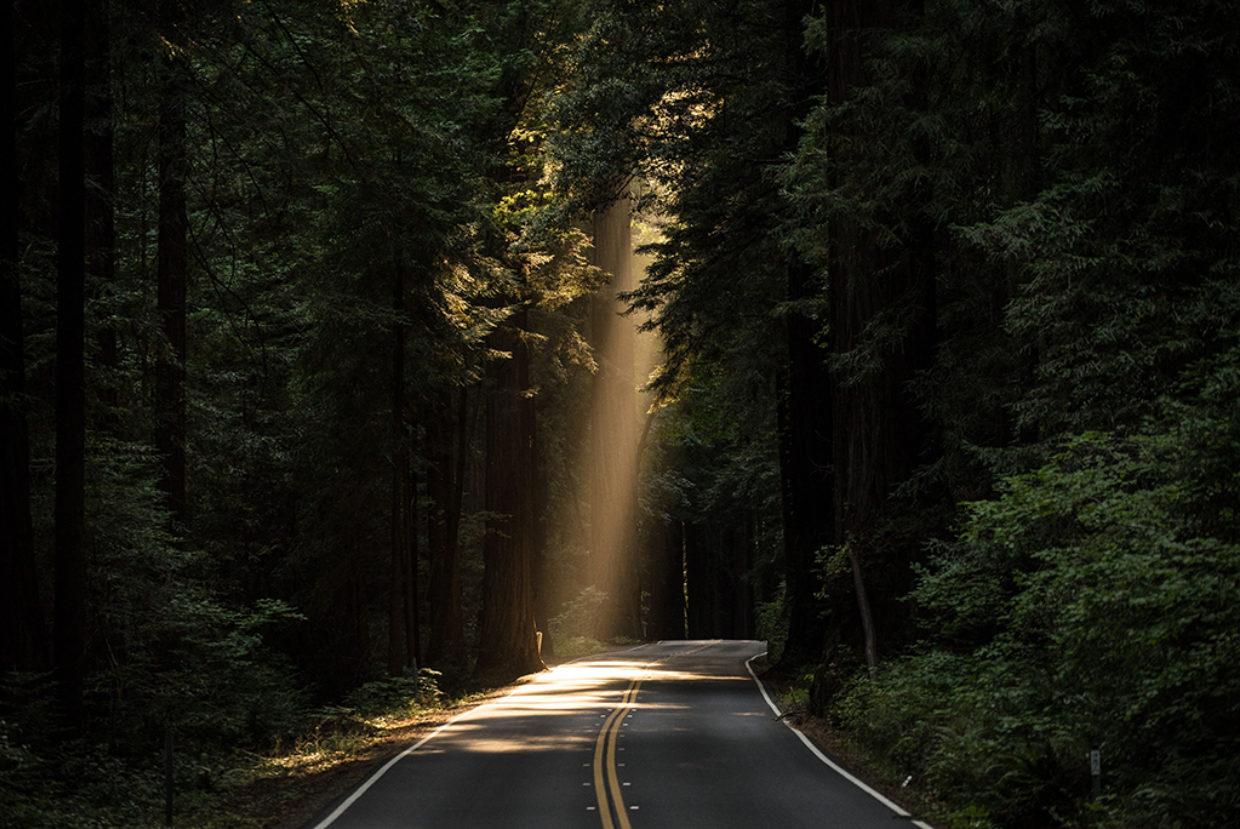 A road in the middle of a forest with a ray of sunlight going through the branches