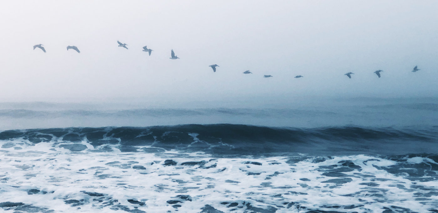 Birds flying across an ocean in a line