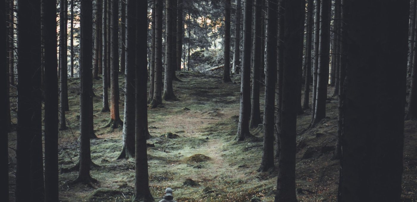 Person looking through a forest of trees