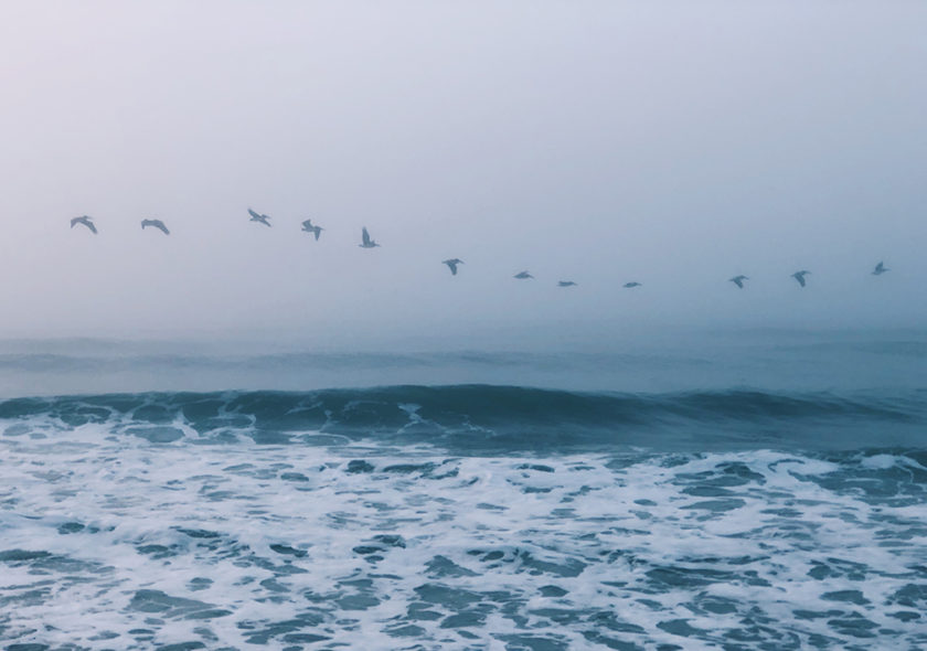 Birds flying across the ocean in a line