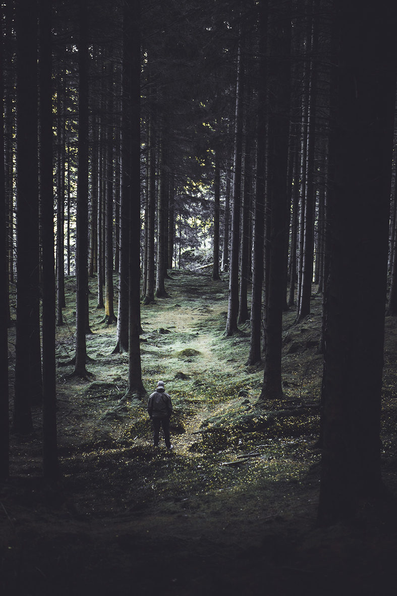 A person surrounded by many trees looking out