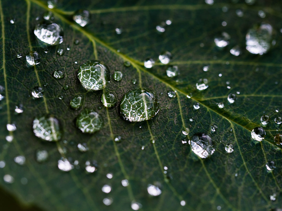 Close-up of a green leaf covered in raindrops